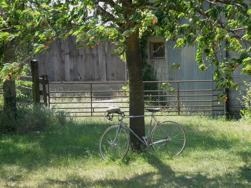 Juin 2011 le temps des cerises et des promenades à bicyclettes Grandv28