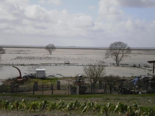 Ambès, entre Garonne et Gironde H-20-210