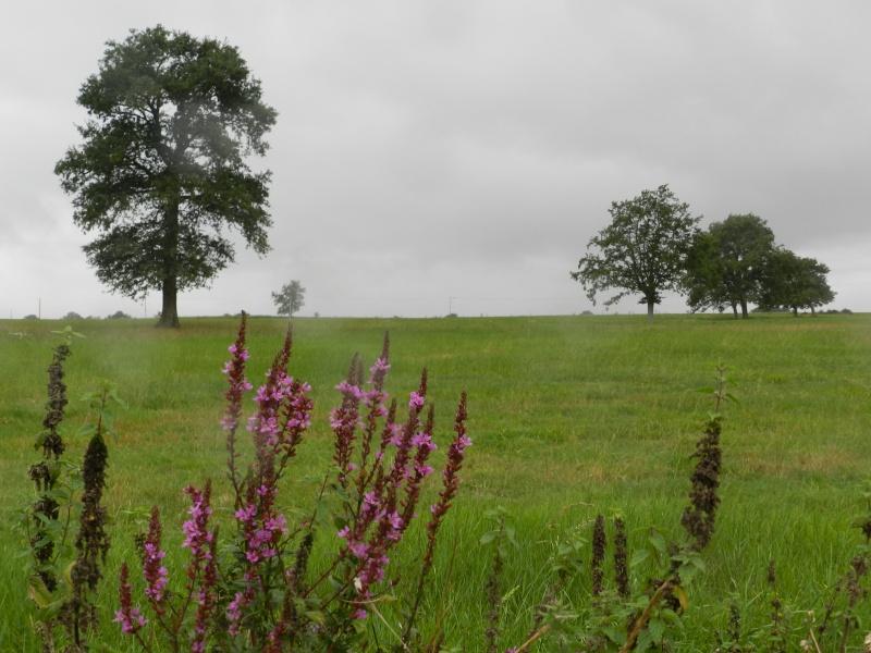Août 2011 en Mayenne, promenade du soir Legran10