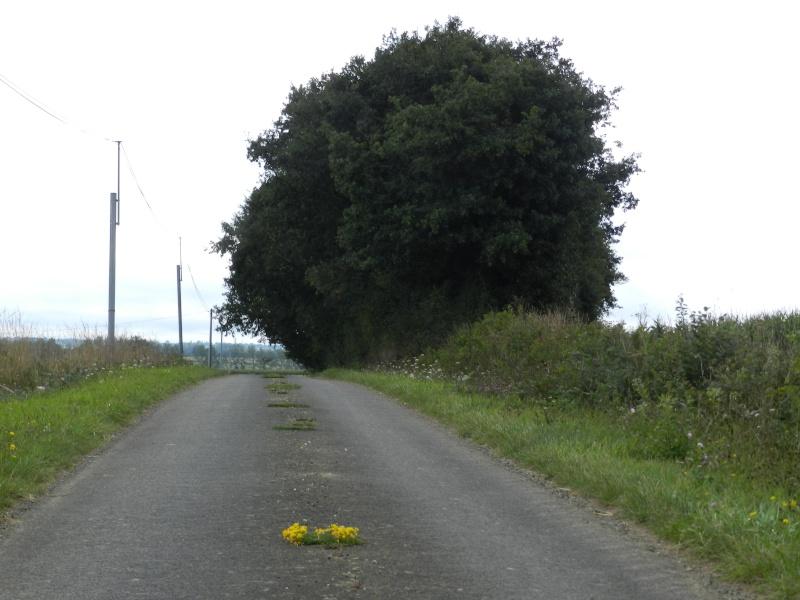 Août 2011 en Mayenne, promenade du soir Legran11