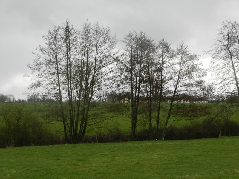 Attention au Roi des Aulnes (mars 2012) Legran39
