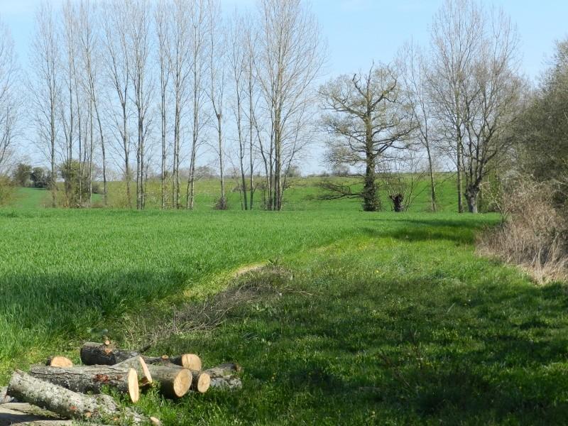 Attention au Roi des Aulnes (mars 2012) Legran52