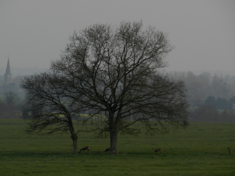 Accueillis par des chevreuils (6 avril 2012) Legran64