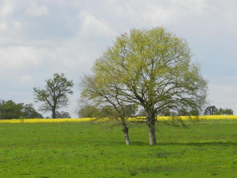 Ciels changeants (fin avril 2012) Legran75