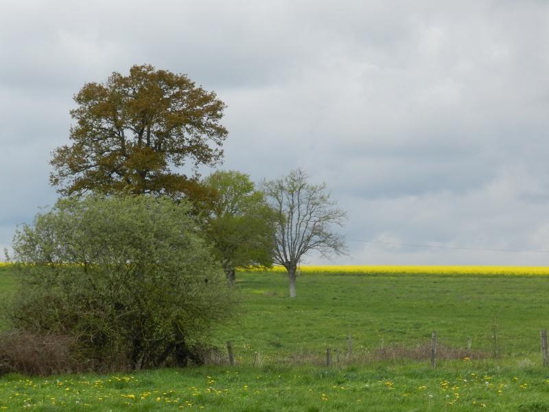 Ciels changeants (fin avril 2012) Legran78