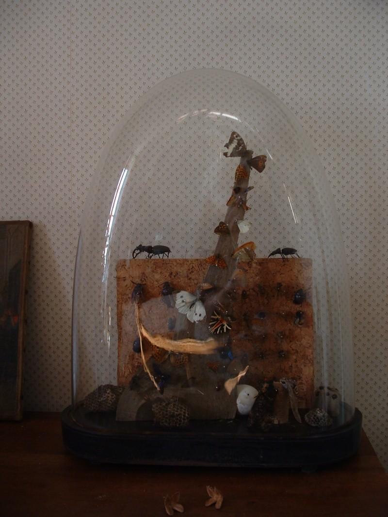 mon cabinet de curiosité ardèchois Marcla11