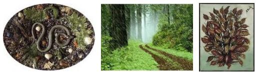Juxtapositions oulipiennes d'images - Poésie des contrastes Nature10