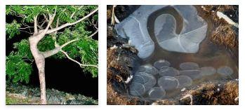 Juxtapositions oulipiennes d'images - Poésie des contrastes Nature13