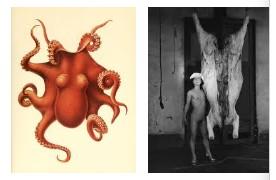 Juxtapositions oulipiennes d'images - Poésie des contrastes Poulpe10