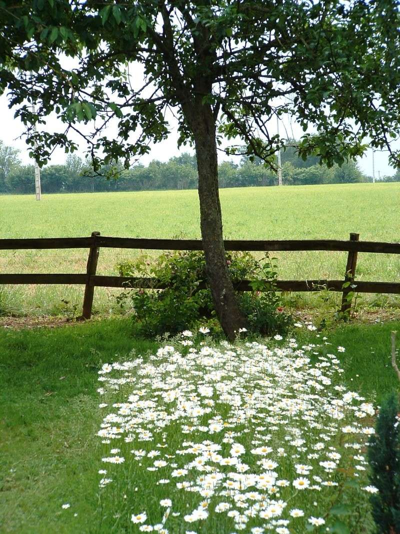 Un autre regard sur une ferme abandonnée Raudie11