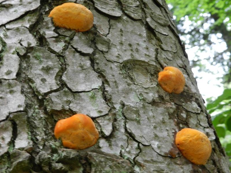Festival champignons Août 2011 au Suc des Vents Roched16
