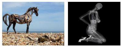 Juxtapositions oulipiennes d'images - Poésie des contrastes Squele10