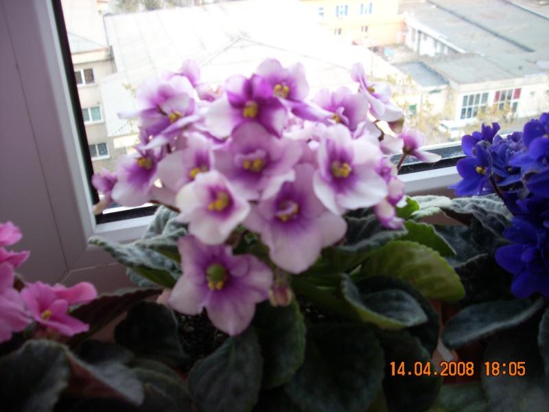 Flori de apartament-Îngrijire,înmulţire şi exponate 1_10