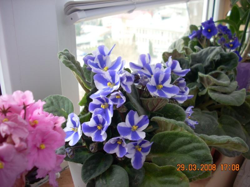 Flori de apartament-Îngrijire,înmulţire şi exponate 511