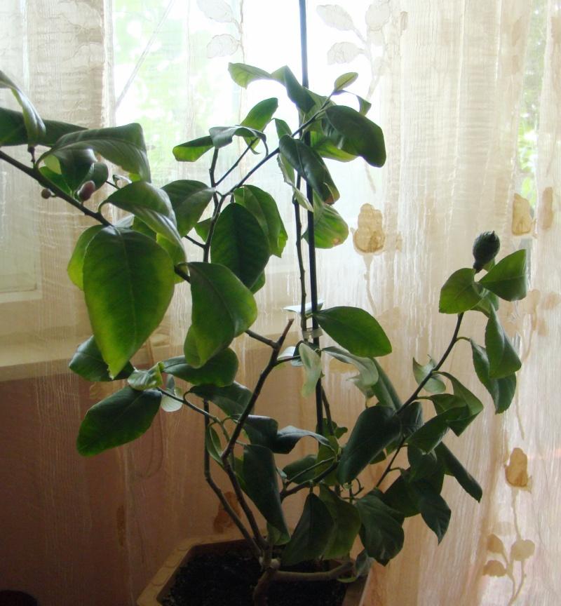 Flori de apartament-Îngrijire,înmulţire şi exponate Balcon11