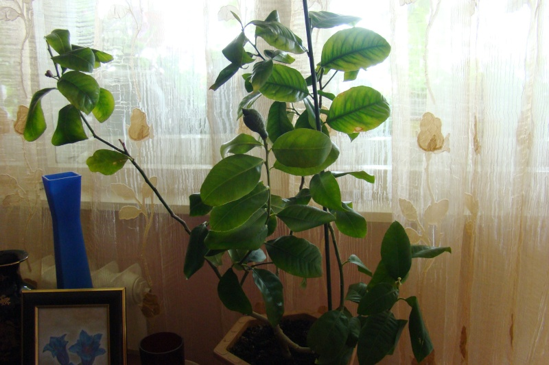 Flori de apartament-Îngrijire,înmulţire şi exponate Balcon13