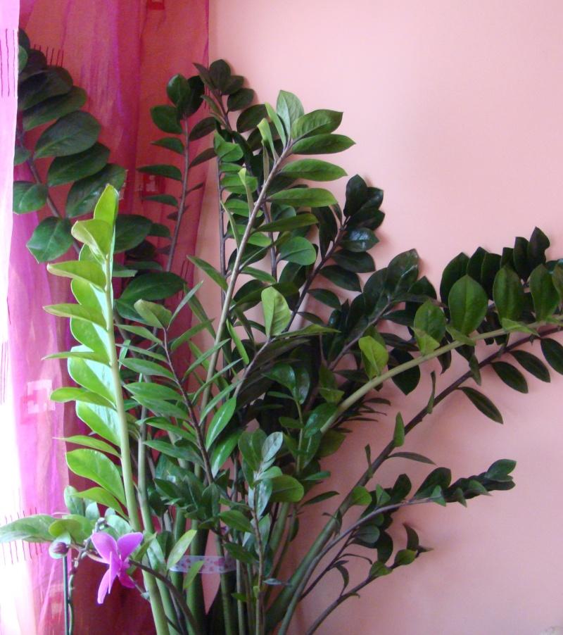 Flori de apartament-Îngrijire,înmulţire şi exponate Balcon14