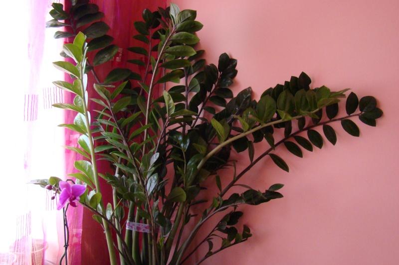 Flori de apartament-Îngrijire,înmulţire şi exponate Balcon15