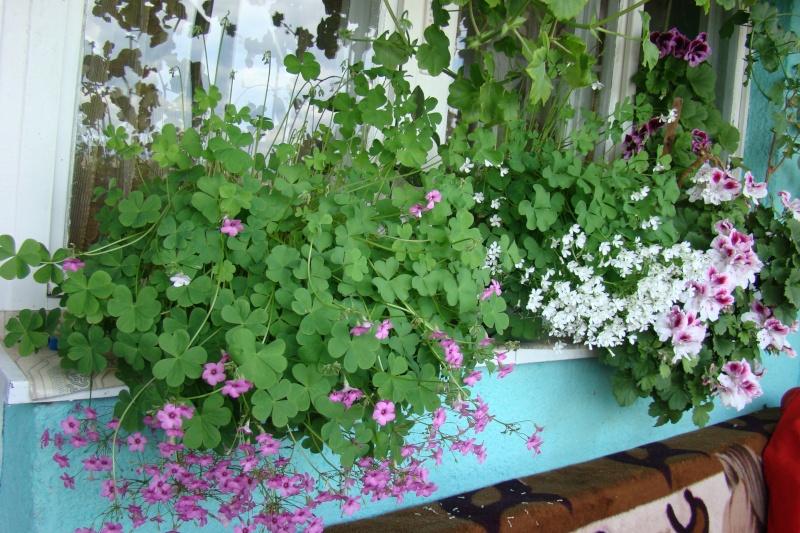 Flori de apartament-Îngrijire,înmulţire şi exponate Balcon24