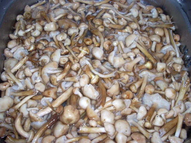 Muraturi in otet si in saramura-alte preparate(conserve din legume) pentru iarna Bureti11