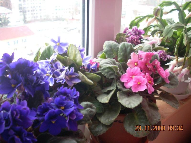 Flori de apartament-Îngrijire,înmulţire şi exponate Clip_718