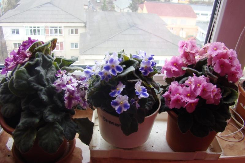 Flori de apartament-Îngrijire,înmulţire şi exponate Flori-24