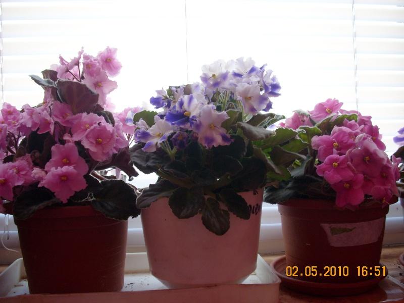 Flori de apartament-Îngrijire,înmulţire şi exponate Flori_21