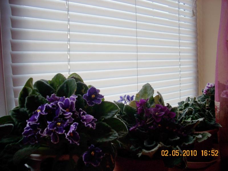 Flori de apartament-Îngrijire,înmulţire şi exponate Flori_24