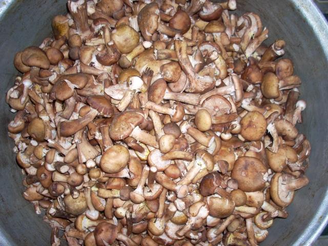 Muraturi in otet si in saramura-alte preparate(conserve din legume) pentru iarna Ghebe_10