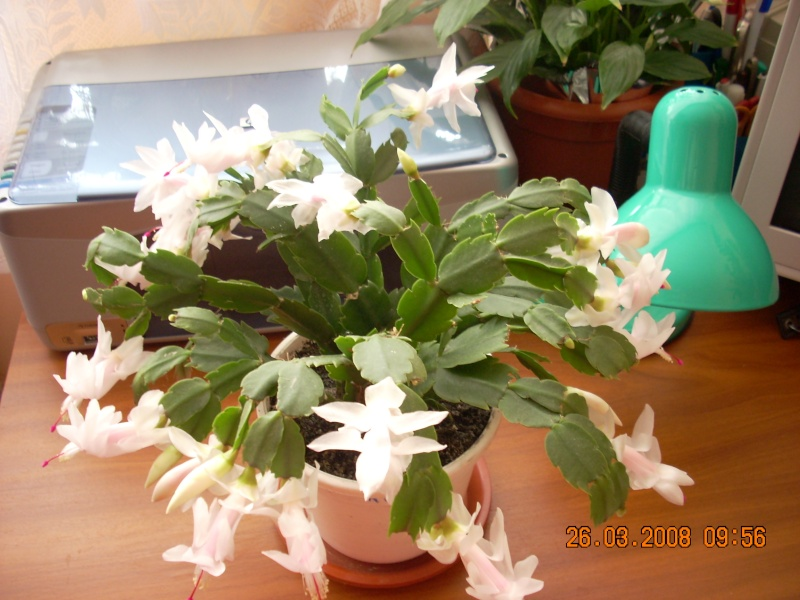 Flori de apartament-Îngrijire,înmulţire şi exponate R10
