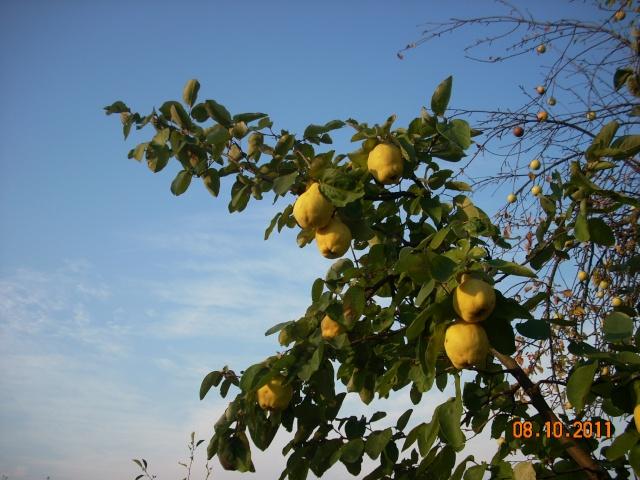 Dulceţuri tradiţionale, siropuri, gemuri, compot pt.iarna şi fructe confiate. Rustic11