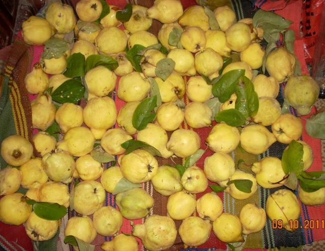 Dulceţuri tradiţionale, siropuri, gemuri, compot pt.iarna şi fructe confiate. Rustic12