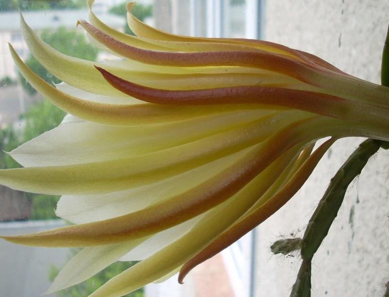 Flori de apartament-Îngrijire,înmulţire şi exponate Terasa15