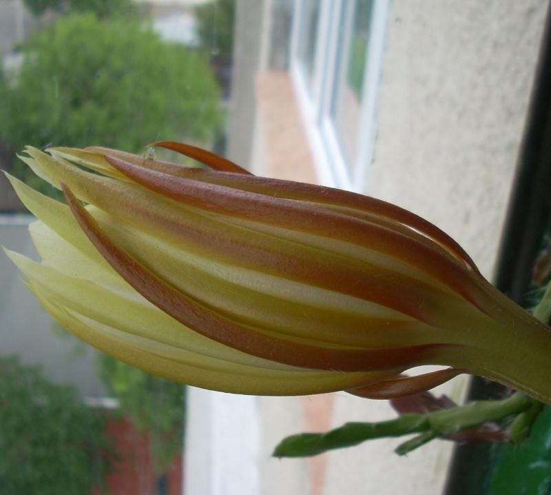 Flori de apartament-Îngrijire,înmulţire şi exponate Terasa16
