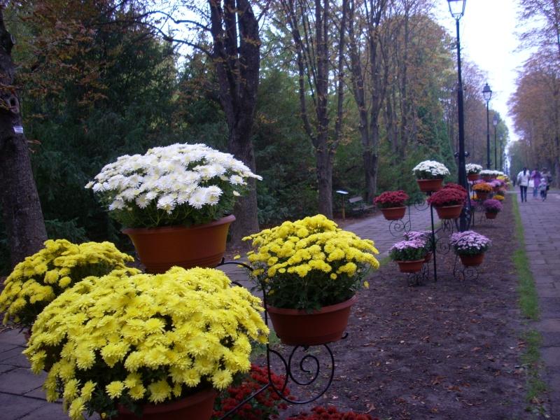 Expoziţia Flori de Toamnă-Iasi -23 octombrie – 20 noiembrie 2011-a XXXV-a editie Verni123