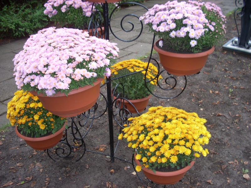 Expoziţia Flori de Toamnă-Iasi -23 octombrie – 20 noiembrie 2011-a XXXV-a editie Verni125