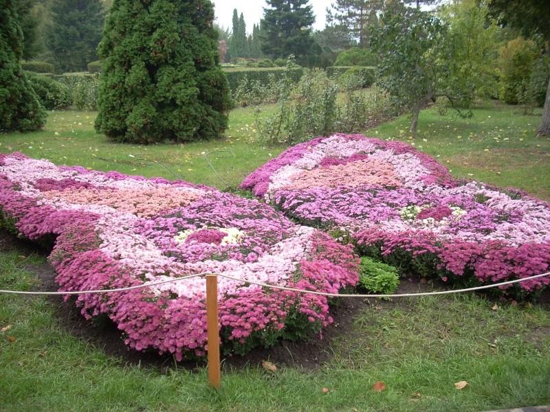 Expoziţia Flori de Toamnă-Iasi -23 octombrie – 20 noiembrie 2011-a XXXV-a editie Verni130
