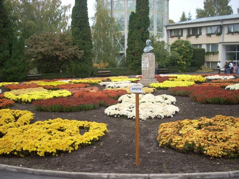 Expoziţia Flori de Toamnă-Iasi -23 octombrie – 20 noiembrie 2011-a XXXV-a editie Verni131