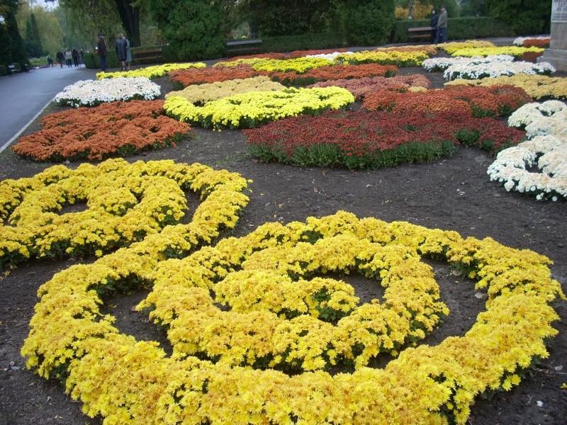 Expoziţia Flori de Toamnă-Iasi -23 octombrie – 20 noiembrie 2011-a XXXV-a editie Verni132