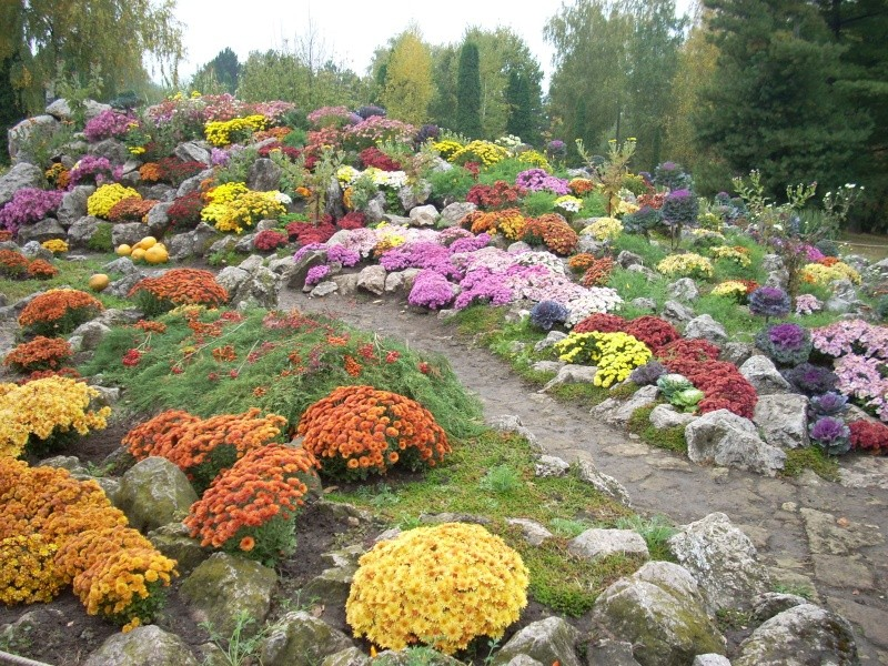 Expoziţia Flori de Toamnă-Iasi -23 octombrie – 20 noiembrie 2011-a XXXV-a editie Verni133