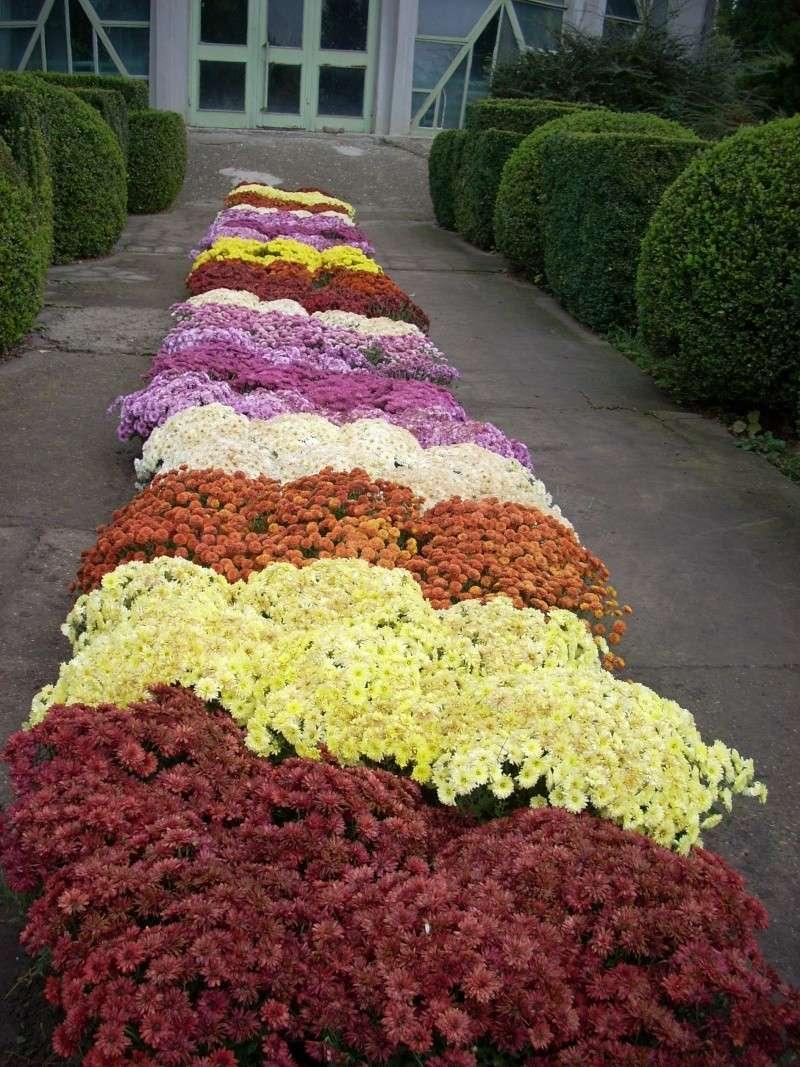 Expoziţia Flori de Toamnă-Iasi -23 octombrie – 20 noiembrie 2011-a XXXV-a editie Verni135