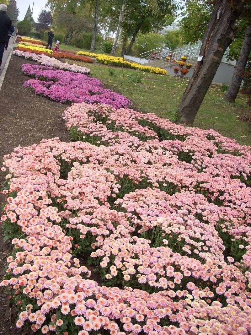 Expoziţia Flori de Toamnă-Iasi -23 octombrie – 20 noiembrie 2011-a XXXV-a editie Verni136