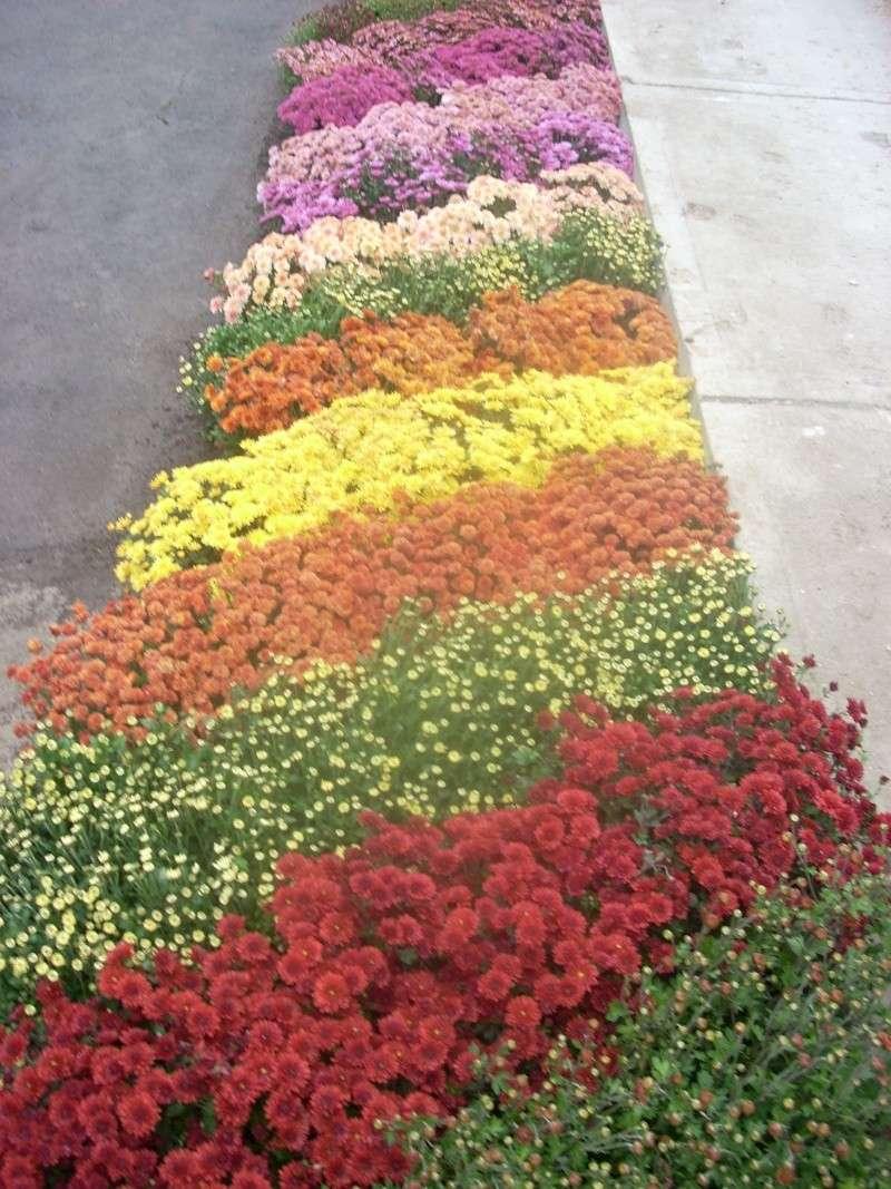 Expoziţia Flori de Toamnă-Iasi -23 octombrie – 20 noiembrie 2011-a XXXV-a editie Verni140