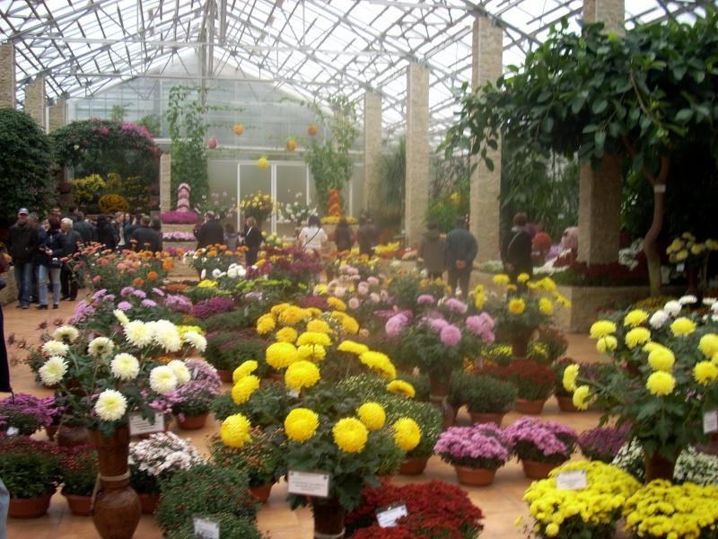 Expoziţia Flori de Toamnă-Iasi -23 octombrie – 20 noiembrie 2011-a XXXV-a editie Verni142