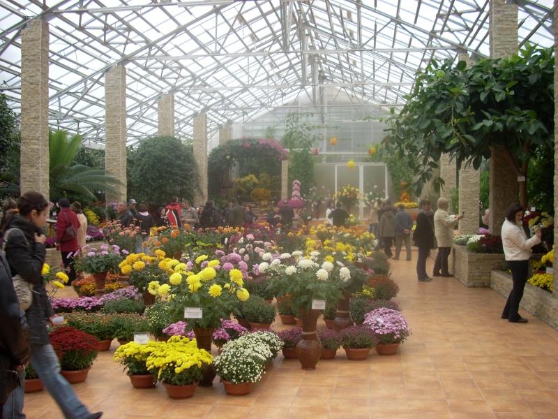 Expoziţia Flori de Toamnă-Iasi -23 octombrie – 20 noiembrie 2011-a XXXV-a editie Verni143