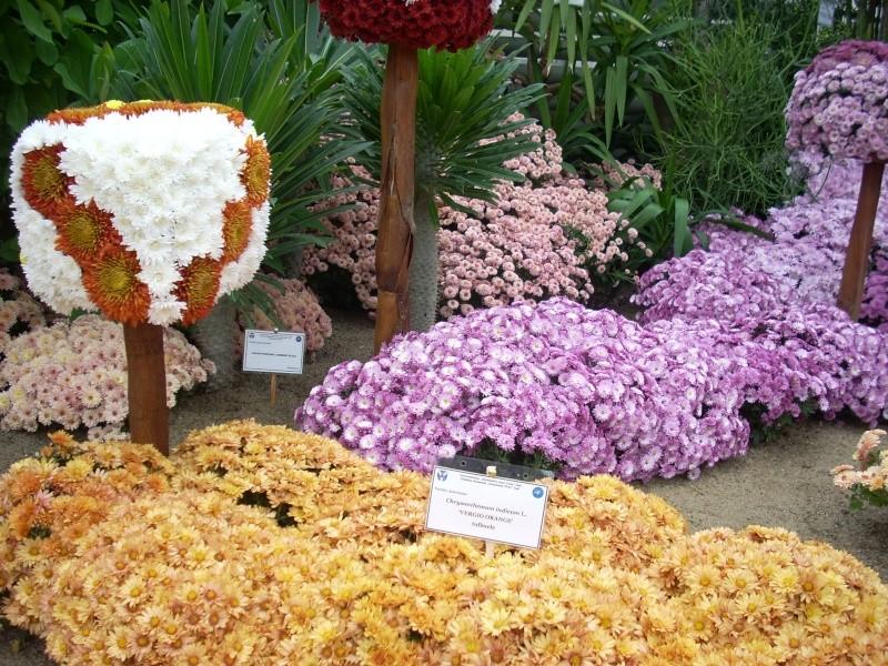 Expoziţia Flori de Toamnă-Iasi -23 octombrie – 20 noiembrie 2011-a XXXV-a editie Verni146