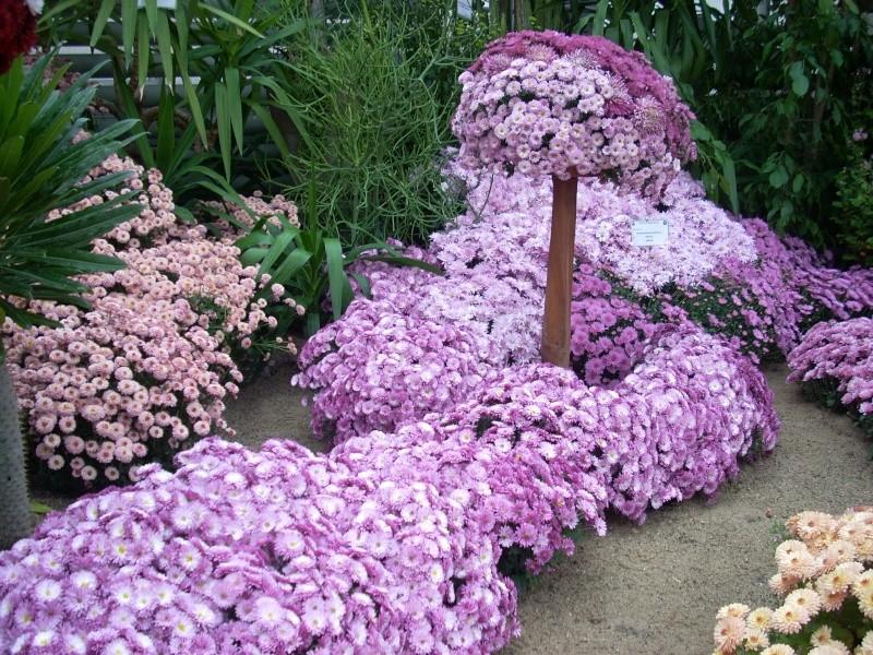Expoziţia Flori de Toamnă-Iasi -23 octombrie – 20 noiembrie 2011-a XXXV-a editie Verni147