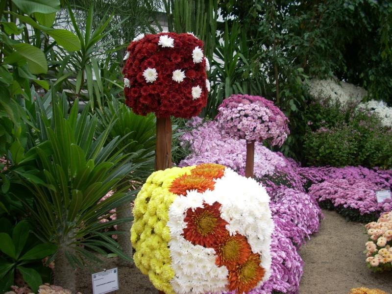 Expoziţia Flori de Toamnă-Iasi -23 octombrie – 20 noiembrie 2011-a XXXV-a editie Verni148