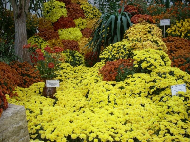 Expoziţia Flori de Toamnă-Iasi -23 octombrie – 20 noiembrie 2011-a XXXV-a editie Verni149