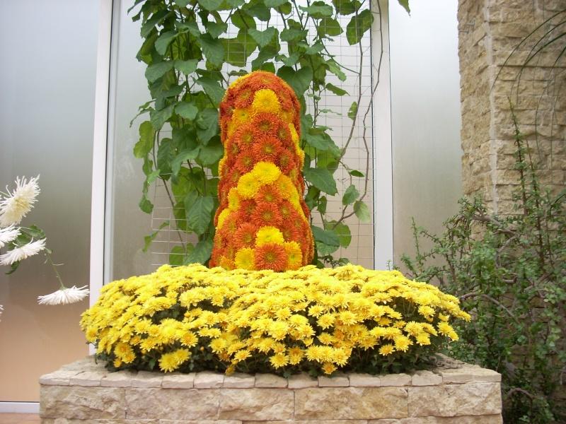 Expoziţia Flori de Toamnă-Iasi -23 octombrie – 20 noiembrie 2011-a XXXV-a editie Verni150